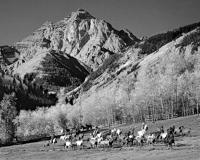 [© Round-up by John Austin Hill is described with Black and White, Black, Gray, White, Mountain, Woods, Horizontal, Fall, Animal, Horse, Horses, Dog, Stock, Pyramid, Pyramid Peak, Rocky Mountain, White River National Forest, Aspen, Colorado, Air, Blue sky, Leaf, Leaves, sky, Trail, Chris Bentley, person, People, Alpine, Mountains, Farms, Farm, Rural, Ranches, Tree, Trees, Cottonwoods, Fine Art hit 13571 rate ]