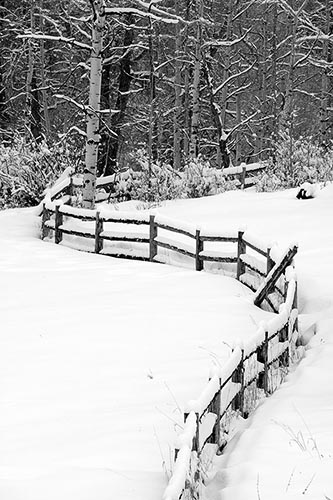 [© Winding Fence, Winter Aspens - B&W by Judy Hill is described with Lenado, Woody Creek, Colorado, High Key, Black, Cold, Cool, Gray, Neutrals, Silver, White, Snow, Snowy, Woods, 2004, Winter, Tree, Trees, Aspens, Vertical, Stock, Fine Art, Rocky Mountains, Fence, Farm, Mountain, Ranches, Black and White hit 15598 rate ]
