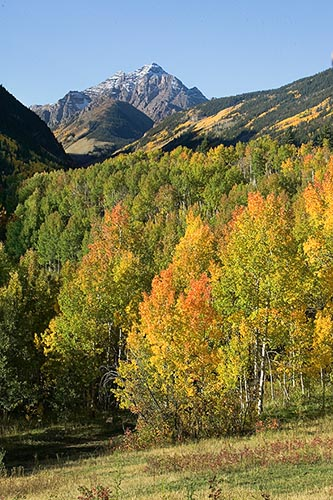 [© Fall Pyramid T Lazy 7, V by Judy Hill is described with Fine Art, Stock, Blue, Gray, Green, Hot, Orange, Yellows, Reds, White River National Forest, Mountain, Air, Leaf, Leaves, Peak, Rocky, Woods, Rocky Mountains, Autumn, Trees, Color, Warm, Farm, Vertical, Fall, Maroon Bells-Snowmass Wilderness, Aspen, Colorado, Rockys, Rocky Mountain, Pyramid, Pyramid Peak, Foliage, Grass, Mt., Pasture, Tree, Alpine, Mountains, Ranches, 2005, Cottonwoods, Aspens, golden hit 13181 rate ]