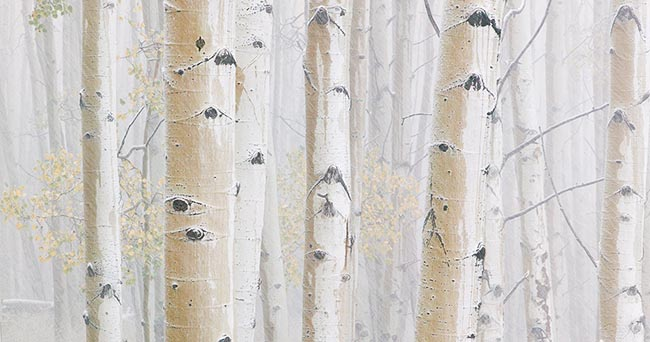 [© Winter's Coming by Judy Hill is described with Color, Neutrals, Woods, Winter, Stock, High Key, Black, Brown, Cold, Cool, Gray, White, Aspen, Colorado, Rockys, White River National Forest, Old Snowmass, Snow, Snowy, Tree, Forest, 2006, Aspens, Trees, Horizontal, Abstract, Fine Art, Rocky Mountains hit 14347 rate ]