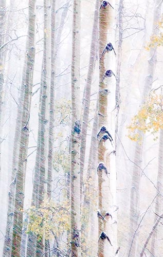 [© Winter Aspens Abstract by Judy Hill is described with Color, Neutrals, Woods, Winter, Stock, High Key, Black, Brown, Cold, Cool, Gray, White, Aspen, Colorado, Rockys, White River National Forest, Old Snowmass, Snow, Snowy, Tree, Forest, 2006, Aspens, Trees, Horizontal, Abstract, Fine Art, Rocky Mountains