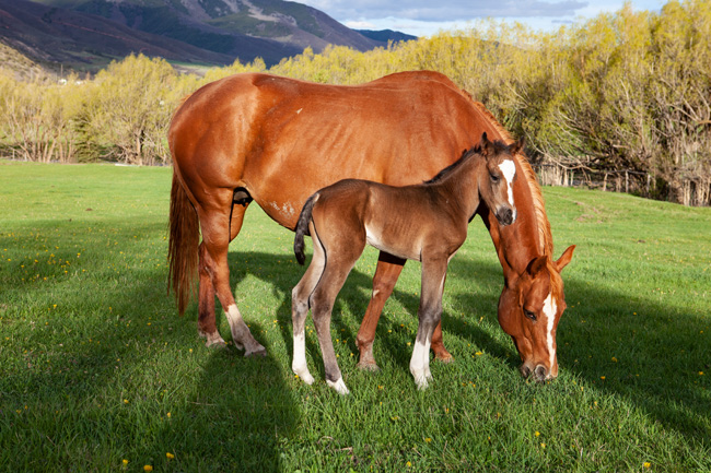 [© Gerbaz Mom and Colt by Judy Hill Lovins is described with Color, Fine Art, Sunset, Sunrise, Summer, Spring, Brown, Green, Before retrofit, retro hit 406 rate ]