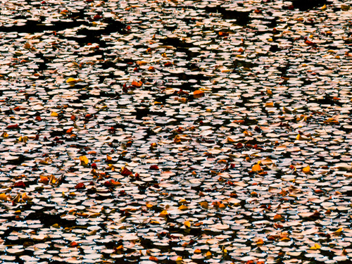 [© Leaves and Pond by Amory B. Lovins is described with Color, Fine Art, Fall, Pond, Horizontal, Warm, Mountains, Leaves, Water, orange, Rocky Mountains, retro hit 3629 rate ]