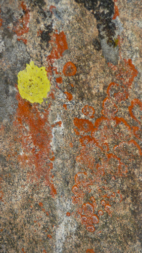 [© Lichen Rock Vertican by Amory B. Lovins is described with Color, Fine Art, Fall, Abstract, Vertical, Warm, Mountains, Rocks, Lichen, yellow, orange, beige, Rocky Mountains hit 2029 rate ]