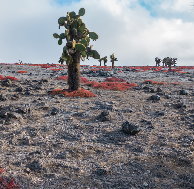 [© Cactus Desert by Amory B. Lovins is described with Galapagos, Cactus, Color, Fine Art, Vertical, Cool, Green, Gray, Orange hit 1559 rate ]
