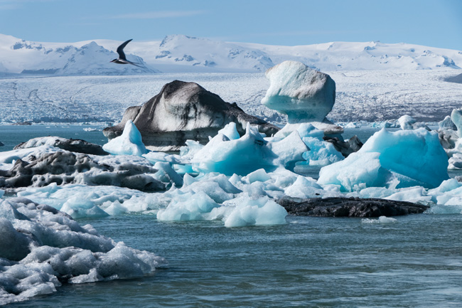 [© Jokulsarlon by Amory B. Lovins is described with Iceland, Fine Art, Winter, Bird, Blue, Brown, Color, Black, White, Ice, Glacial lagoon, Jökulsárlón, Iceburg, Horizontal, Cool, Mountain, Spring, Slideshow, Ocean, Cyan, Water hit 4741 rate ]