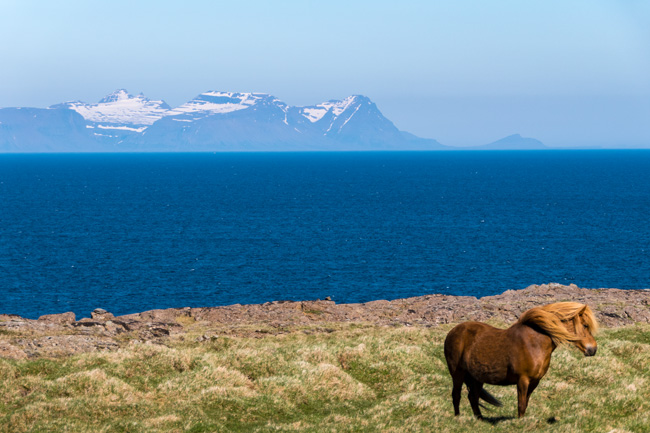 [© Wind in the Mane by Amory B. Lovins is described with Iceland, Color, Spring, Slideshow, Fine Art, Horizontal, Orange, Brown, Green, Blue, Cool, Warm, Water, Horse, Mountain, Ocean hit 282 rate ]