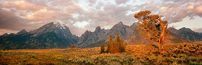 [© Old Patriarch by Judy Hill is described with Stock, Color, Warm, Mountain, Horizontal, Panorama, Fall, Gold, golden, Gray, Orange, Reds, Green, Rocky Mountain, Rockys, Air, Clouds, Cloudy, Mt., Tree, Path, Sagebrush, Alpine, National Park, Grand Teton National Park, Old Patriarch, Teton, Wyoming, The Dreamweaver, Rocky Mountains, Ancient, Desert, Fine Art hit 12434 rate ]