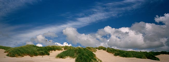[© Oregon Coast Dunes and Clouds by Judy Hill is described with Fine Art, Color, Cool, Warm, Beach, Horizontal, Panorama, Spring, Summer, Stock, Beige, Blue, Brown, Gray, Neutrals, White, Air, Blue sky, Brush, Clouds, Coast, Grass, Sand, Sandy, sky, Bird, Birds, Seagull, Coastline, Oregon hit 9311 rate ]